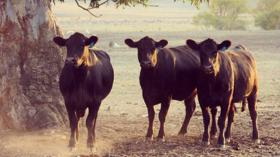 Community concern over proposed Jardana Feedlot